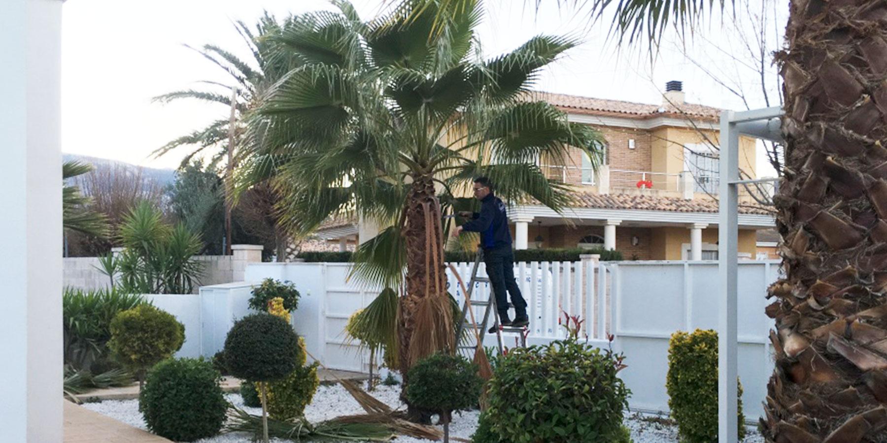 Aranda-Multiservicios-y-Limpiezas-mantenimiento-de-jardines